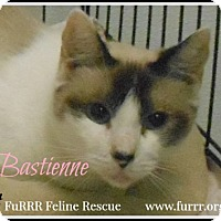 Adopt A Pet :: Bastienne - Gonic, NH