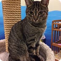 Adopt A Pet :: Winnie - Byron Center, MI