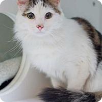 Adopt A Pet :: Jackson - Merrifield, VA