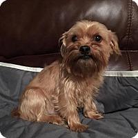 Adopt A Pet :: Chucky - Wilmington, DE