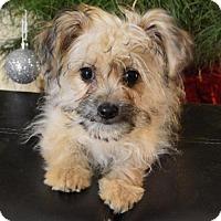 Adopt A Pet :: Graham Cracker - Palo Alto, CA