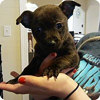 Adopt A Pet :: Rogue - Monroe, NC