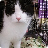 Adopt A Pet :: Nicholas - Columbus, OH