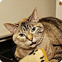 Adopt A Pet :: Samantha - Lincoln, NE