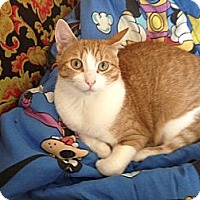 Adopt A Pet :: Perkins - Mississauga, Ontario, ON