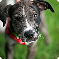 Adopt A Pet :: Franklin - Richmond, VA