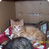 Adopt A Pet :: Max,Choo, Binky &Kal - Island Park, NY