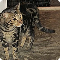 Adopt A Pet :: Sebastian - Jeffersonville, IN