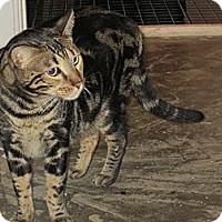 Adopt A Pet :: Sebastian - Jeffersonville, IN