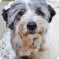 Adopt A Pet :: Vegas - Encinitas, CA