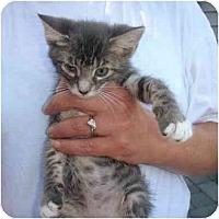 Adopt A Pet :: Tasha - New Egypt, NJ