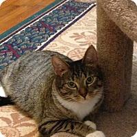 Adopt A Pet :: Igraine - Greensboro, GA