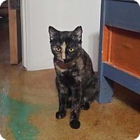 Adopt A Pet :: Verde - Scottsdale, AZ