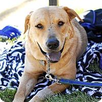 Adopt A Pet :: Pongo - Detroit, MI