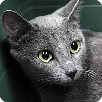 Adopt A Pet :: Iris DeMent - St. Louis, MO