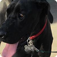 Adopt A Pet :: Akasha - El Paso, TX