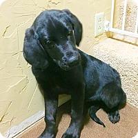 Adopt A Pet :: Maverick - rockford, IL