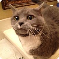 Adopt A Pet :: JoJo - Rowlett, TX