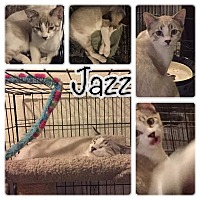 Adopt A Pet :: Jazz - Scottsdale, AZ