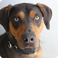 Adopt A Pet :: DWIGHT - Kyle, TX