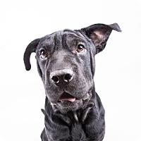 Adopt A Pet :: Leisel - Decatur, GA