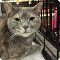 Adopt A Pet :: Millie - Hazlet, NJ