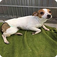 Adopt A Pet :: GABBY - Canfield, OH