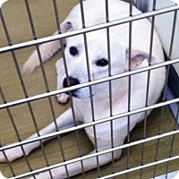 Adopt A Pet :: Jagger - Aurora, CO