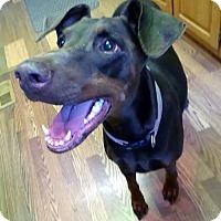Adopt A Pet :: Willow - Battle Ground, WA