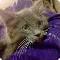 Adopt A Pet :: Hattie - River Edge, NJ
