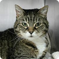 Adopt A Pet :: Agatha - Hilton Head, SC