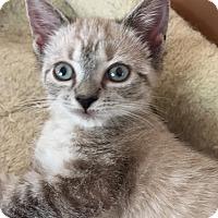 Adopt A Pet :: Ivanka - Monroe, GA