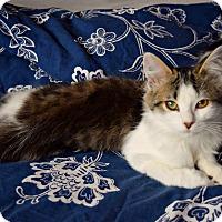 Adopt A Pet :: TOULOUSE - Toronto/GTA, ON
