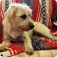 Adopt A Pet :: Jenny - Deer Park, TX