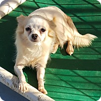 Adopt A Pet :: Sophie Marie - Fayetteville, GA