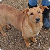 Adopt A Pet :: Watson - Brownsboro, AL