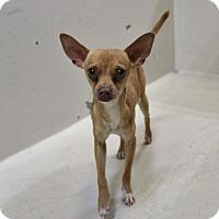 Adopt A Pet :: A13 Seuss - Odessa, TX