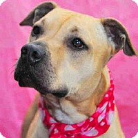 Adopt A Pet :: SABRA - Louisville, KY