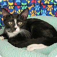 Adopt A Pet :: Alma - Houston, TX