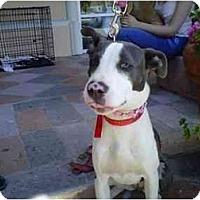 Adopt A Pet :: MALIBU - Malibu, CA