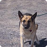 Adopt A Pet :: AVA - Tully, NY