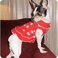 Adopt A Pet :: Dulce - Mooy, AL