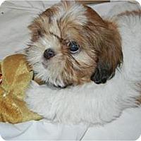 Adopt A Pet :: Sheridan - Antioch, IL