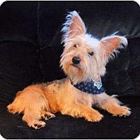Adopt A Pet :: Oakley - Mooy, AL