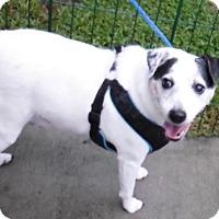 Adopt A Pet :: Bobby - Umatilla, FL