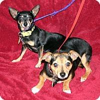 Adopt A Pet :: JoJo - Va Beach, VA