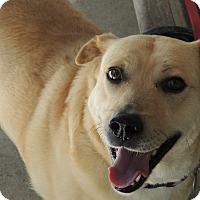 Adopt A Pet :: Elsa URGENT REDUCED - Allentown, PA