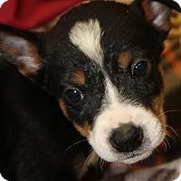 Adopt A Pet :: Turner - Waldorf, MD