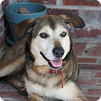 Adopt A Pet :: Rascal - METAIRIE, LA