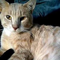 Adopt A Pet :: Bob Hope - Staten Island, NY